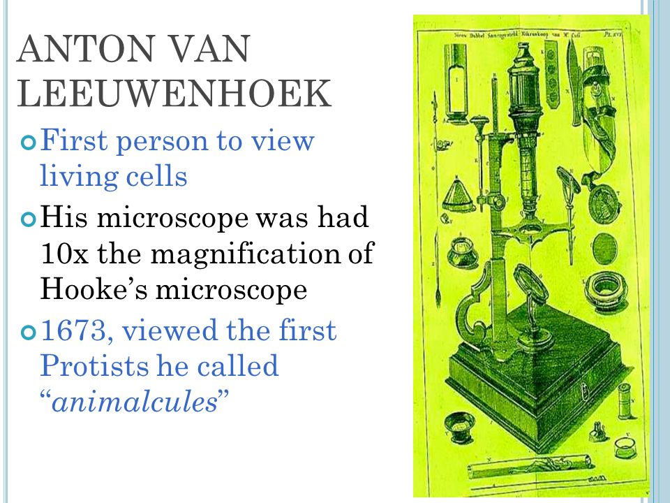 ANTON VAN LEEUWENHOEK First person to view living cells His microscope was had 10x the magnification of Hooke's microscope 1673, viewed the first Protists he called animalcules