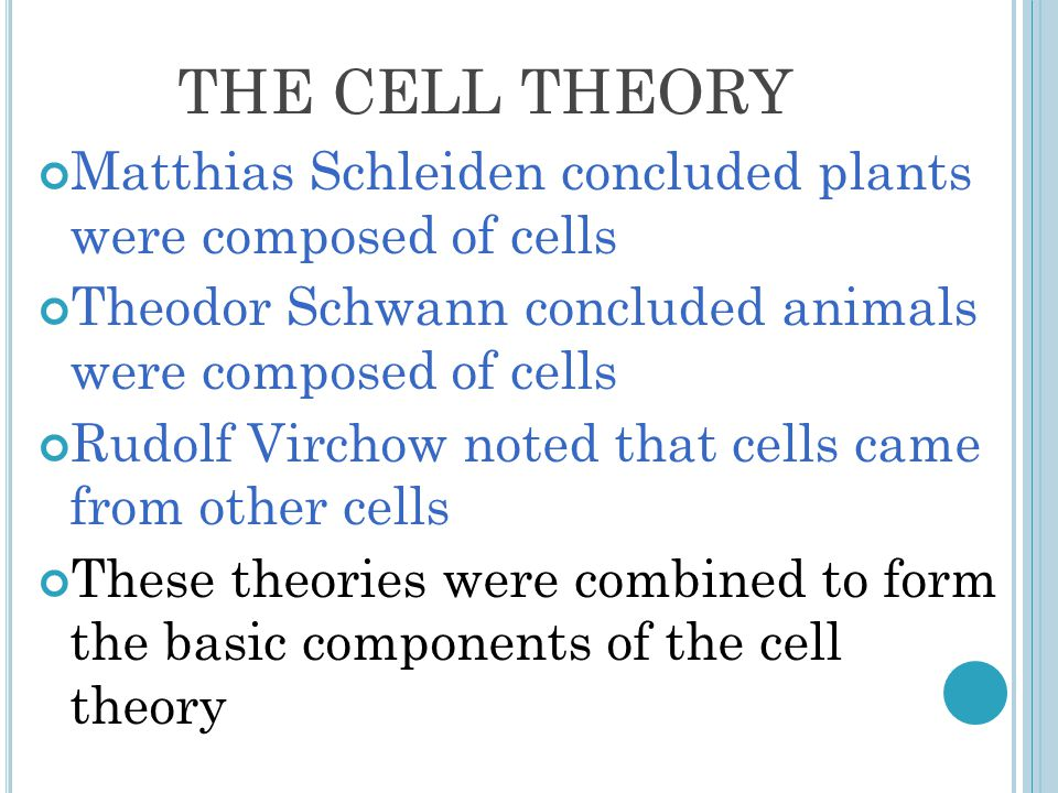 THE CELL THEORY Matthias Schleiden concluded plants were composed of cells Theodor Schwann concluded animals were composed of cells Rudolf Virchow noted that cells came from other cells These theories were combined to form the basic components of the cell theory
