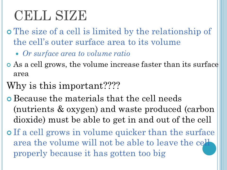 CELL SIZE The size of a cell is limited by the relationship of the cell's outer surface area to its volume Or surface area to volume ratio As a cell grows, the volume increase faster than its surface area Why is this important???.