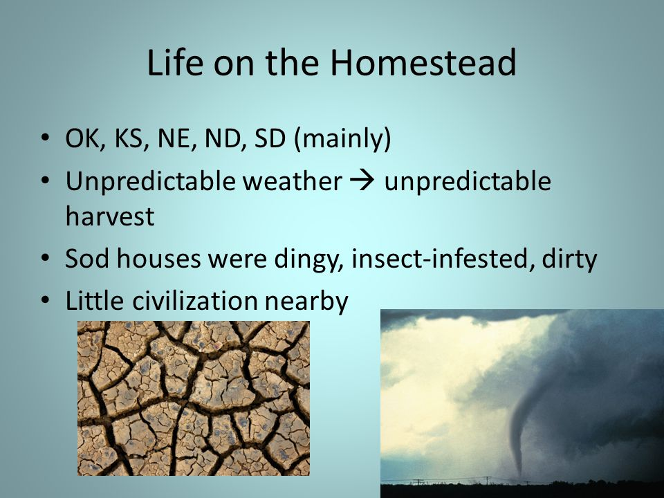 Life on the Homestead OK, KS, NE, ND, SD (mainly) Unpredictable weather  unpredictable harvest Sod houses were dingy, insect-infested, dirty Little civilization nearby