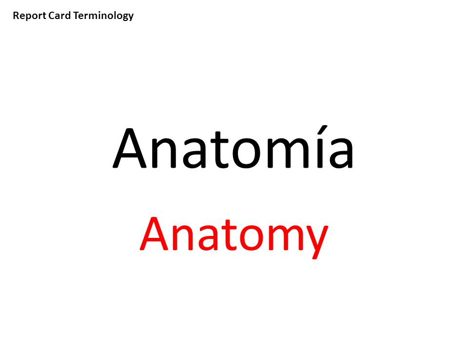 Report Card Terminology Anatomía Anatomy