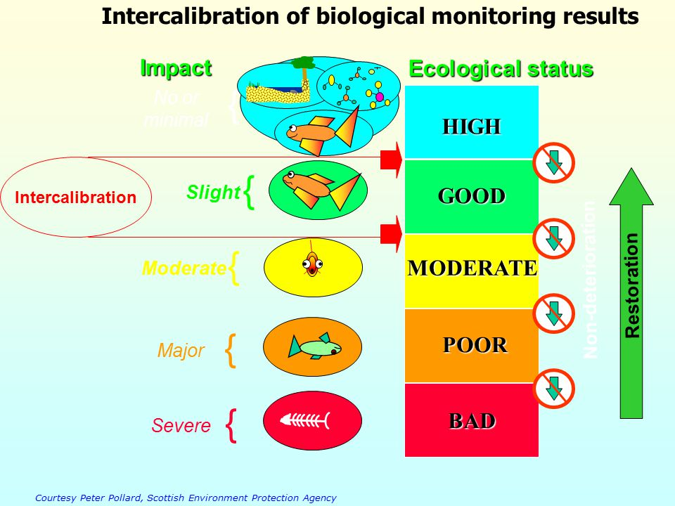 HIGH GOOD MODERATE POOR BAD Ecological status No or minimal { Slight { Moderate { Major { Severe { Non-deterioration Restoration Intercalibration of biological monitoring results Courtesy Peter Pollard, Scottish Environment Protection Agency Impact Intercalibration
