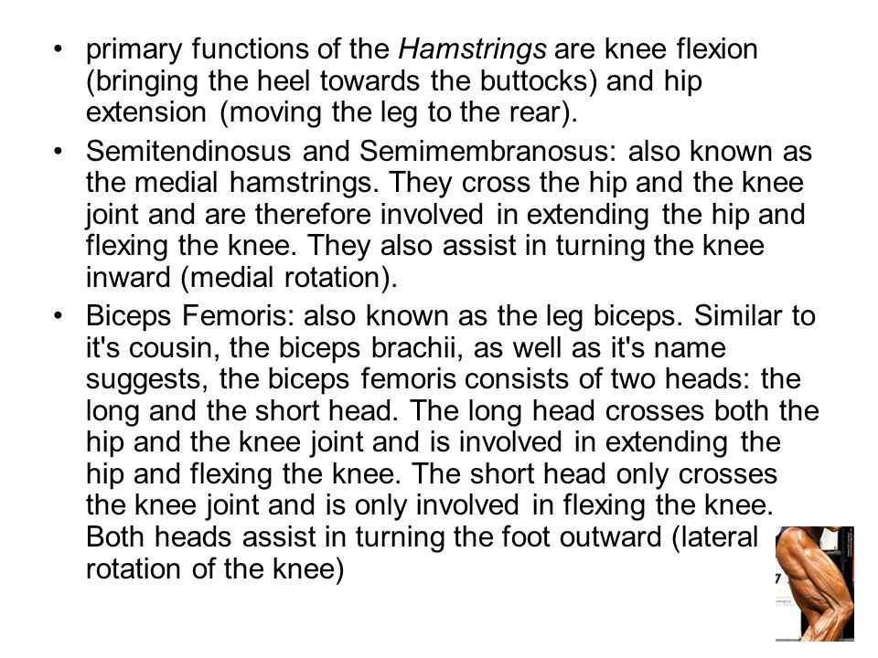 primary functions of the Hamstrings are knee flexion (bringing the heel towards the buttocks) and hip extension (moving the leg to the rear).