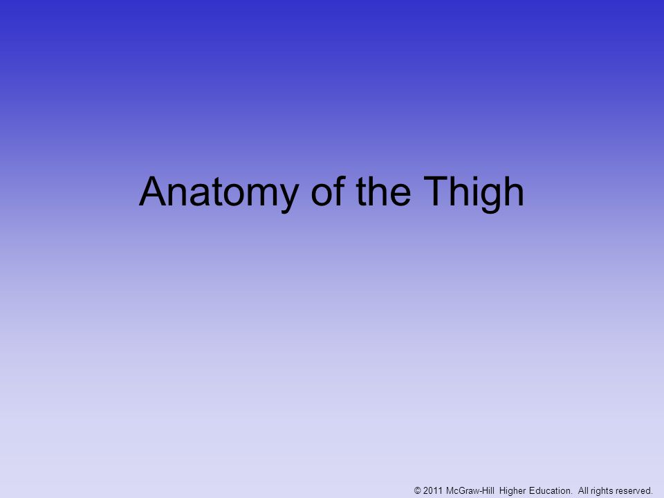 Anatomy of the Thigh © 2011 McGraw-Hill Higher Education. All rights reserved.