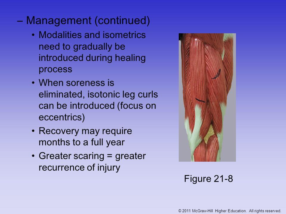 –Management (continued) Modalities and isometrics need to gradually be introduced during healing process When soreness is eliminated, isotonic leg cur