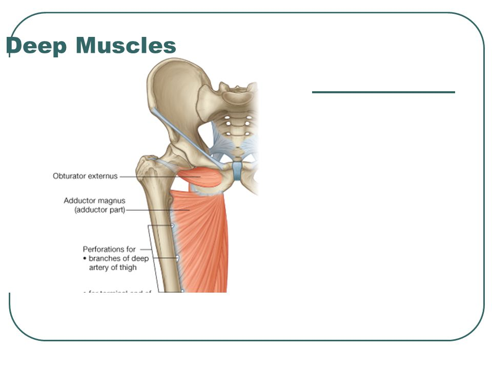 Deep Muscles