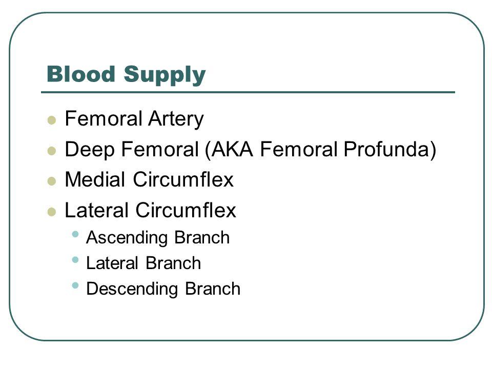 Blood Supply Femoral Artery Deep Femoral (AKA Femoral Profunda) Medial Circumflex Lateral Circumflex Ascending Branch Lateral Branch Descending Branch