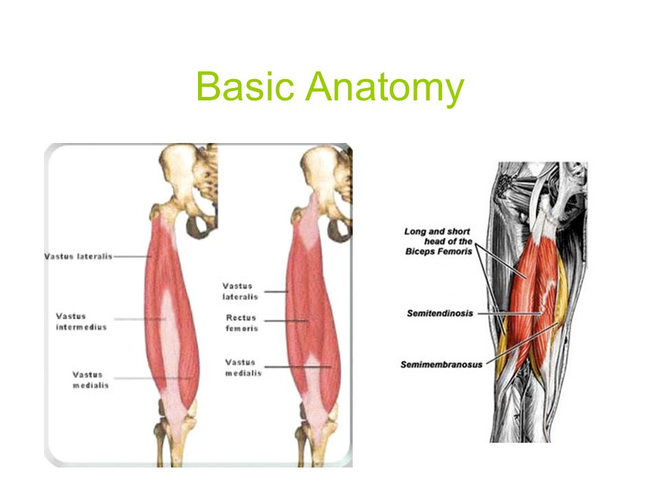 Injuries to the thigh Quadriceps contusion Cause: direct blow to thigh S&S: instant pain; immediate capillary effusion; swelling; point tenderness;  ROM; limp Care: leg in flexion with ice (helps to lengthen muscle fibers); RICE; protective thigh padding