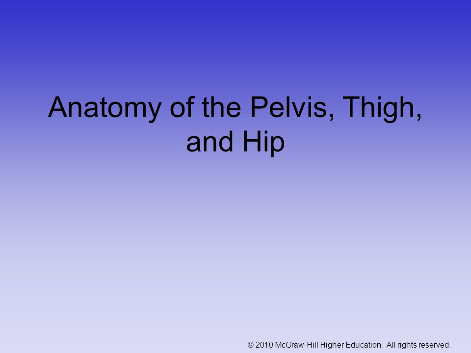 © 2010 McGraw-Hill Higher Education. All rights reserved. Anatomy of the Pelvis, Thigh, and Hip