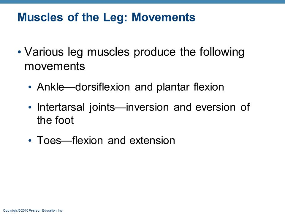 Copyright © 2010 Pearson Education, Inc. Muscles of the Leg: Movements Various leg muscles produce the following movements Ankle—dorsiflexion and plan