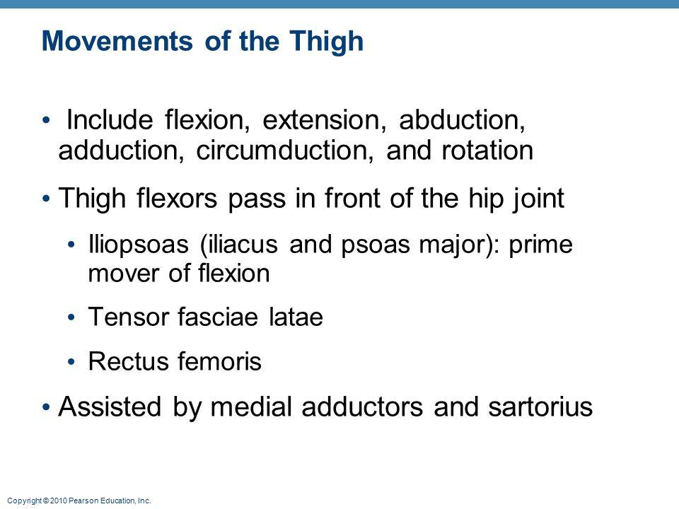 Copyright © 2010 Pearson Education, Inc. Movements of the Thigh Include flexion, extension, abduction, adduction, circumduction, and rotation Thigh fl