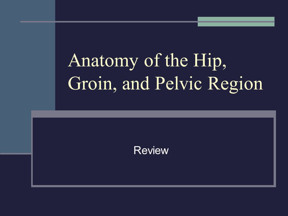 Anatomy of the Hip, Groin, and Pelvic Region Review
