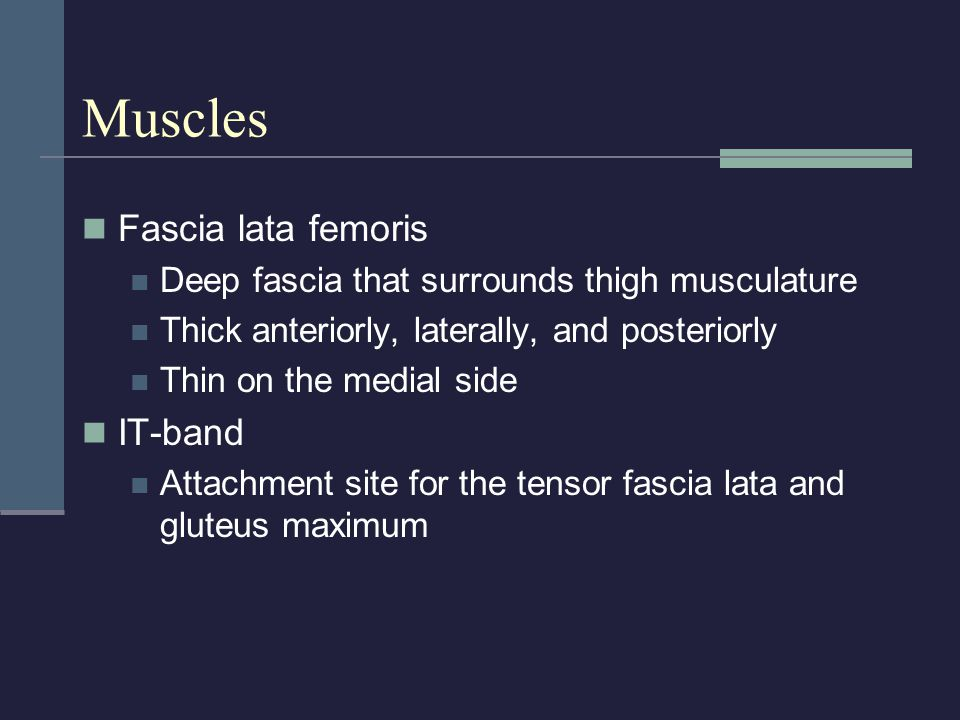 Muscles Fascia lata femoris Deep fascia that surrounds thigh musculature Thick anteriorly, laterally, and posteriorly Thin on the medial side IT-band