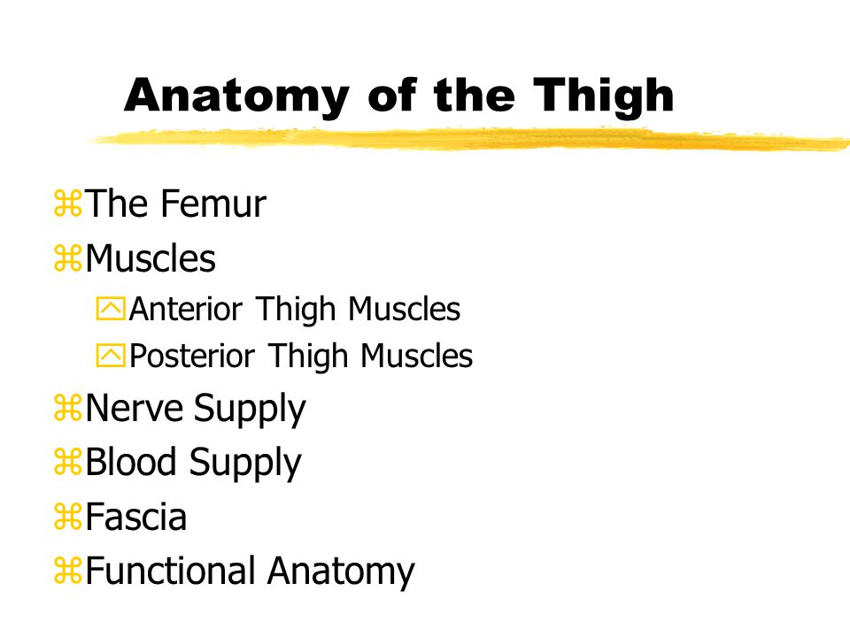 Assessment of the Thigh zHistory zObservation zPalpation zSpecial Tests