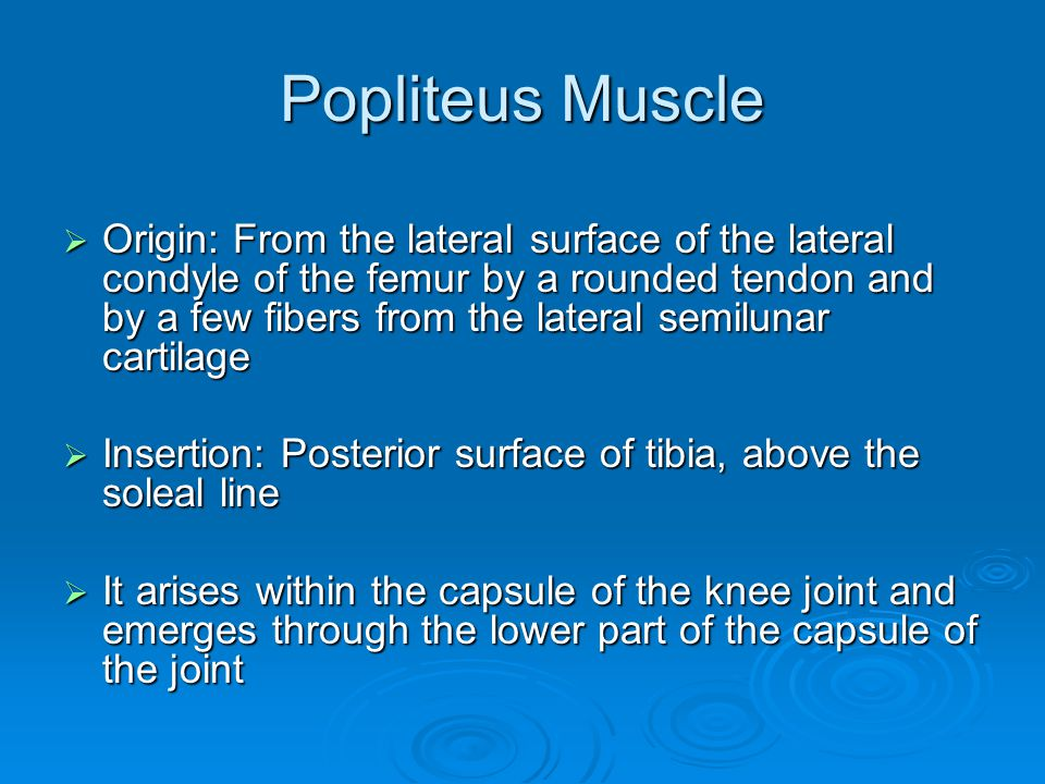 Popliteus Muscle  Origin: From the lateral surface of the lateral condyle of the femur by a rounded tendon and by a few fibers from the lateral semil