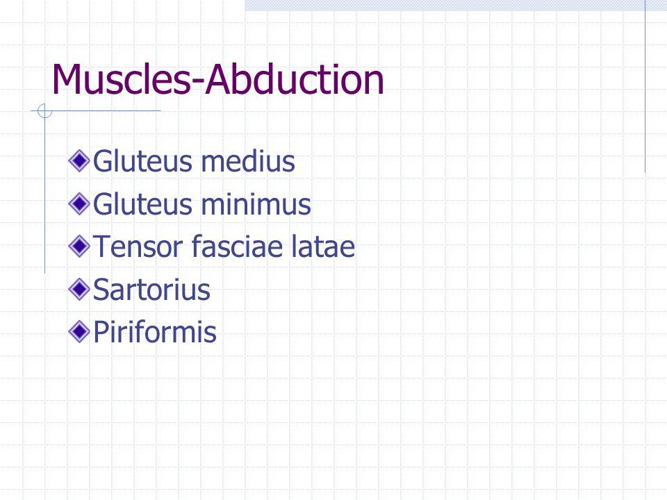 Muscles-Abduction Gluteus medius Gluteus minimus Tensor fasciae latae Sartorius Piriformis