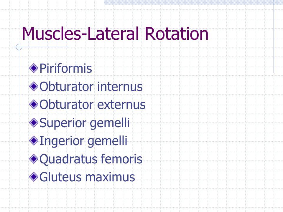 Muscles-Lateral Rotation Piriformis Obturator internus Obturator externus Superior gemelli Ingerior gemelli Quadratus femoris Gluteus maximus