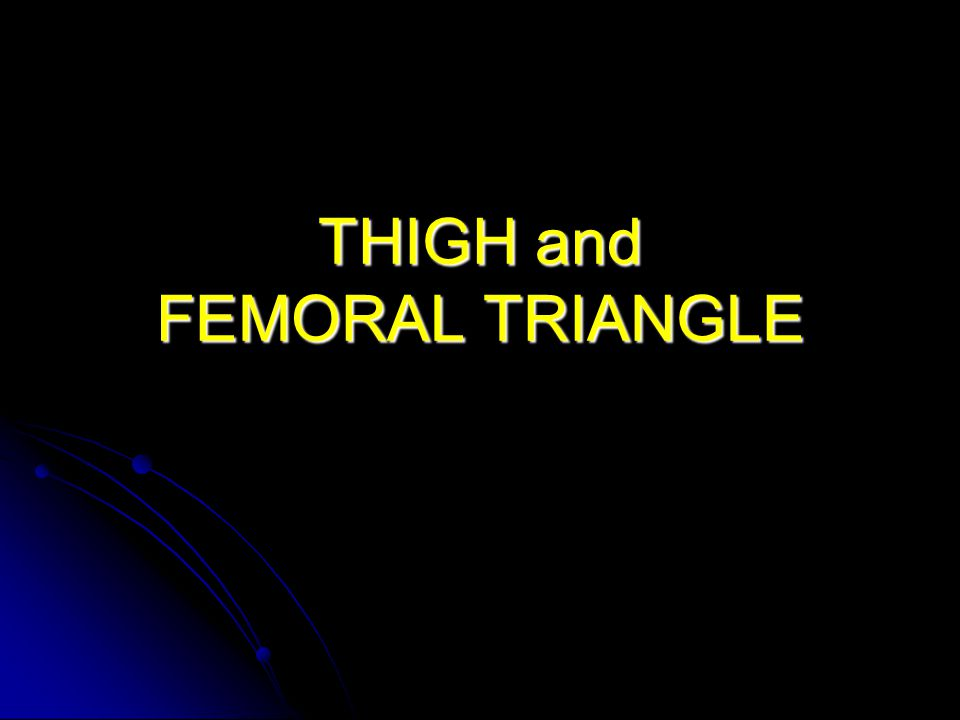 THIGH and FEMORAL TRIANGLE