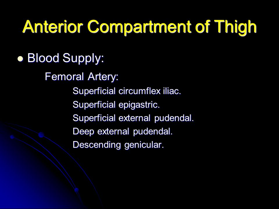 Anterior Compartment of Thigh Blood Supply: Blood Supply: Femoral Artery: Superficial circumflex iliac. Superficial epigastric. Superficial external p