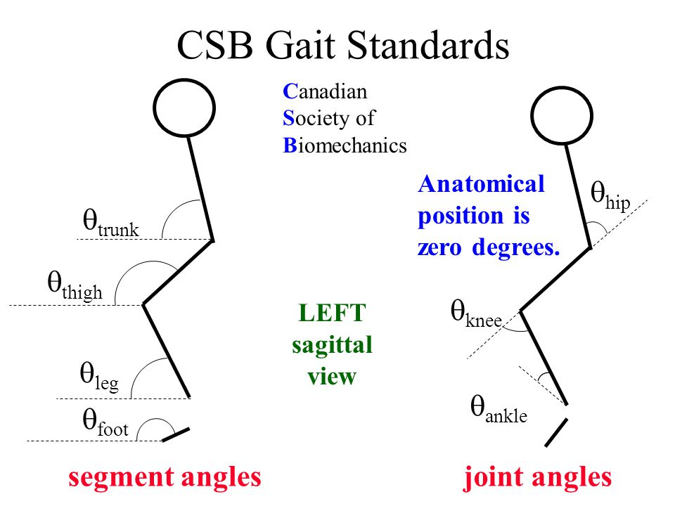 CSB Gait Standards  trunk  thigh  leg  foot segment anglesjoint angles Canadian Society of Biomechanics  hip  knee  ankle LEFT sagittal view Anatomical position is zero degrees.