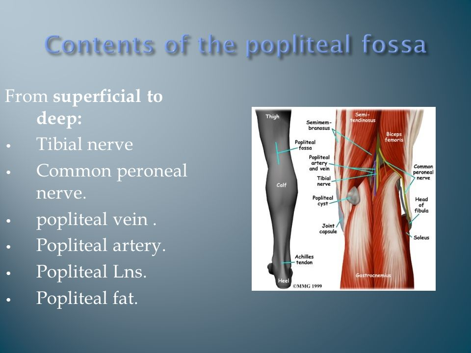 From superficial to deep: Tibial nerve Common peroneal nerve.