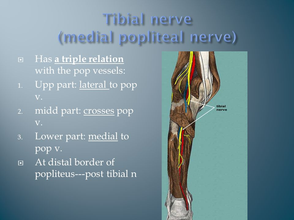  Has a triple relation with the pop vessels: 1. Upp part: lateral to pop v.