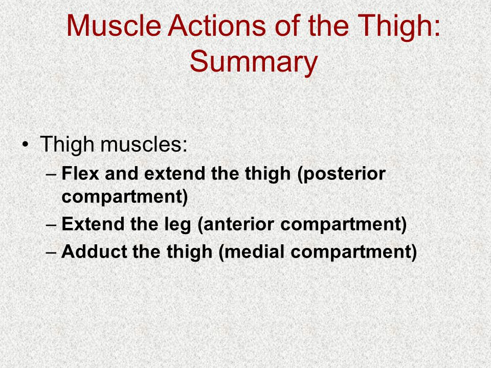 Muscle Actions of the Thigh: Summary Thigh muscles: –Flex and extend the thigh (posterior compartment) –Extend the leg (anterior compartment) –Adduct the thigh (medial compartment)