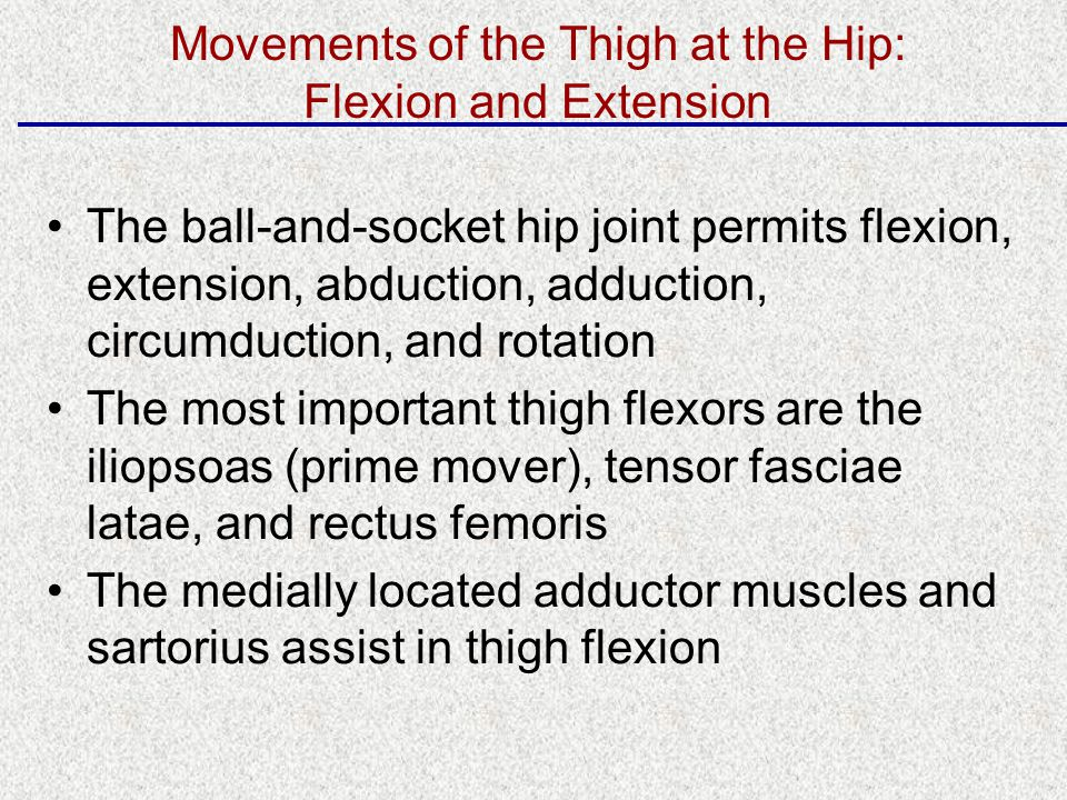 The ball-and-socket hip joint permits flexion, extension, abduction, adduction, circumduction, and rotation The most important thigh flexors are the iliopsoas (prime mover), tensor fasciae latae, and rectus femoris The medially located adductor muscles and sartorius assist in thigh flexion Movements of the Thigh at the Hip: Flexion and Extension