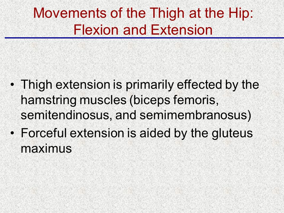Thigh extension is primarily effected by the hamstring muscles (biceps femoris, semitendinosus, and semimembranosus) Forceful extension is aided by the gluteus maximus Movements of the Thigh at the Hip: Flexion and Extension