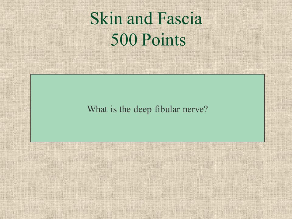 This nerve supplies the L5 dermatome between the first and second toes. Skin and Fascia 500 Points