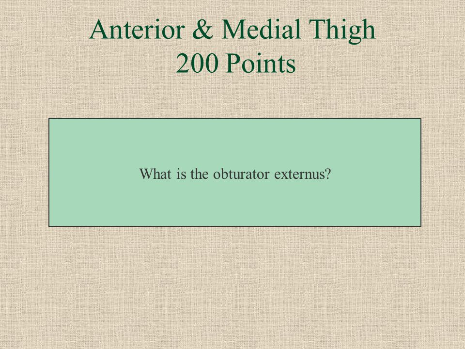 Anterior & Medial Thigh 200 Points This muscle of the medial thigh is a lateral rotator.
