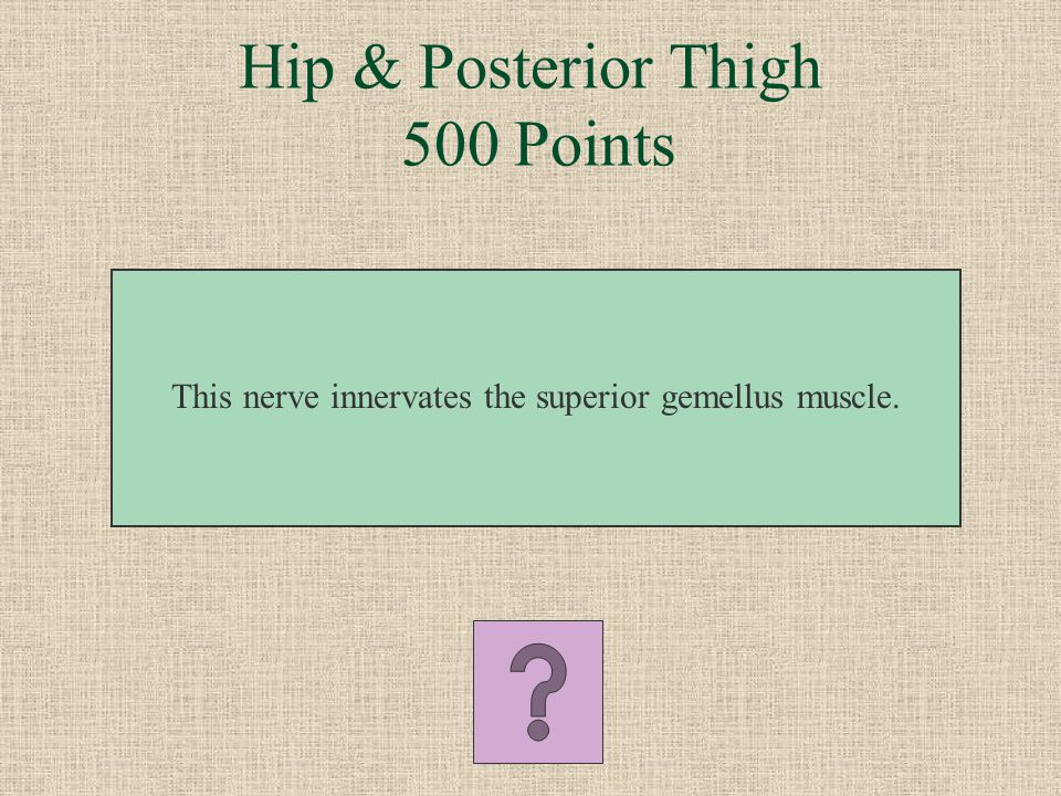 What is the semitendinosus Hip & Posterior Thigh 400 Points