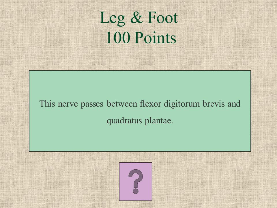 What is the nerve to obturator internus Hip & Posterior Thigh 500 Points