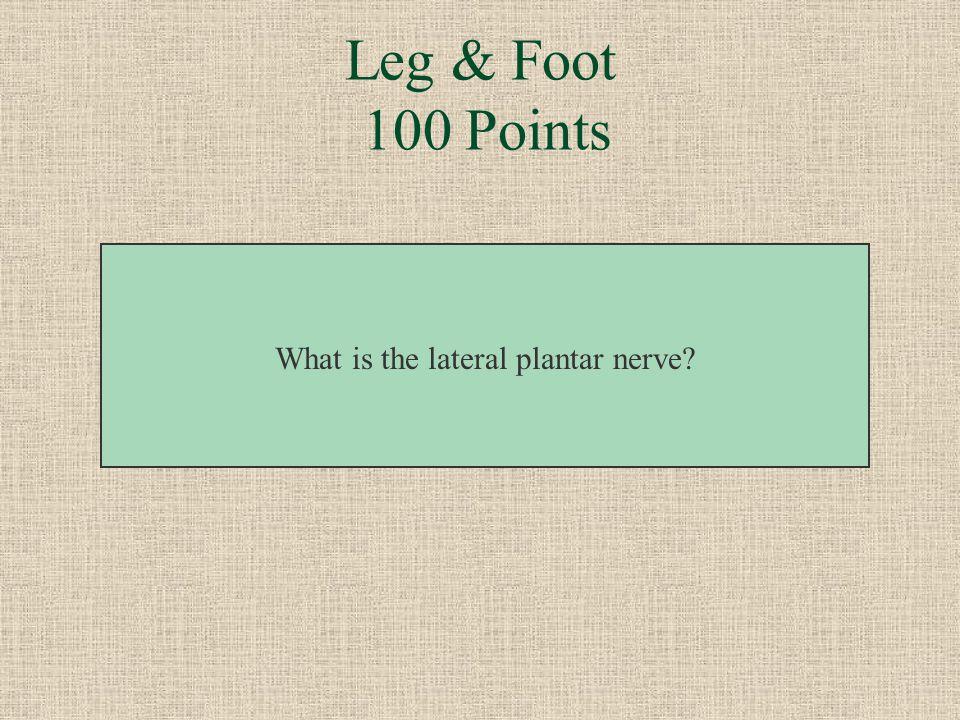 This nerve passes between flexor digitorum brevis and quadratus plantae. Leg & Foot 100 Points