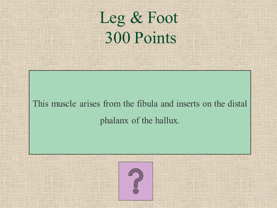What is the fibularis longus? Leg & Foot 200 Points