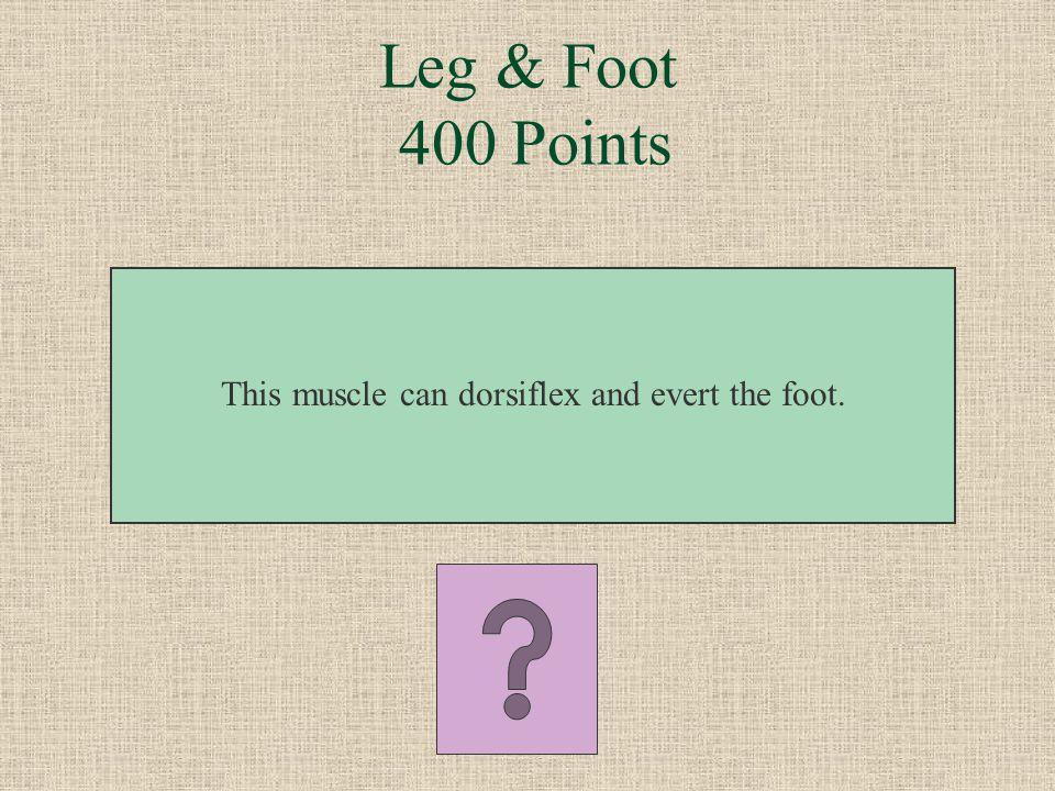 Leg & Foot 300 Points What is the flexor hallucis longus?