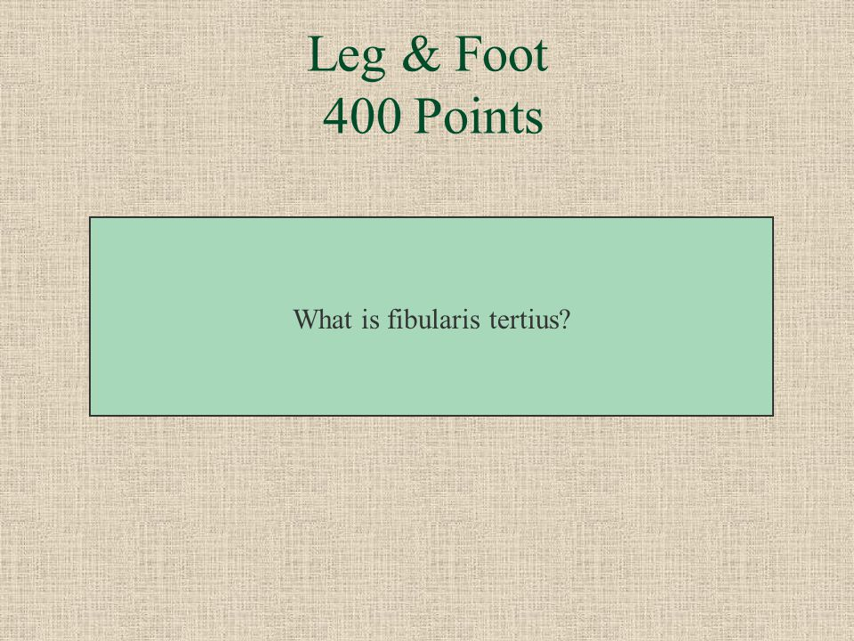 This muscle can dorsiflex and evert the foot. Leg & Foot 400 Points