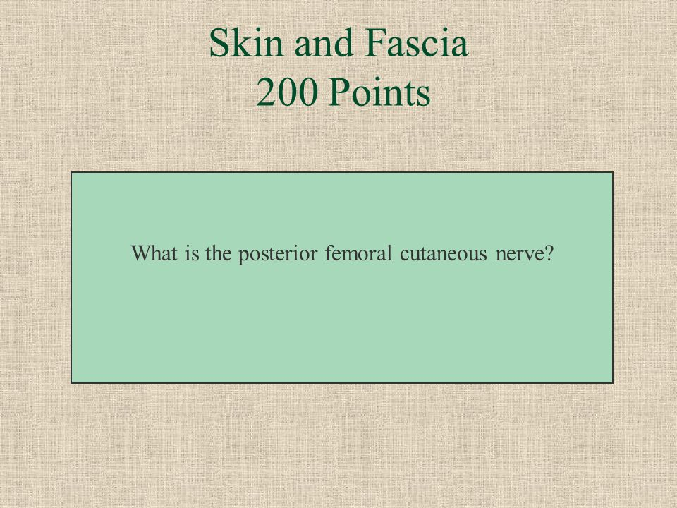 Skin and Fascia 200 Points Branches of this nerve curl up around the gluteal fold.