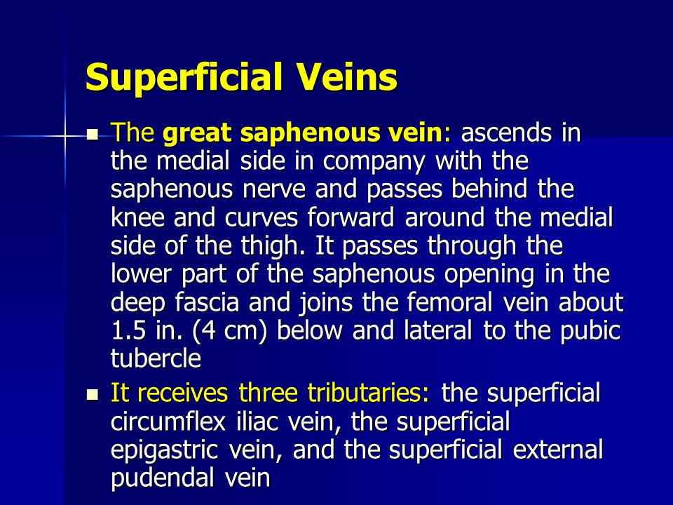 Superficial Veins The great saphenous vein: ascends in the medial side in company with the saphenous nerve and passes behind the knee and curves forward around the medial side of the thigh.