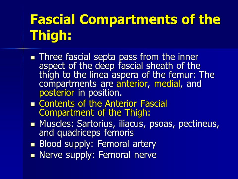 Fascial Compartments of the Thigh: Three fascial septa pass from the inner aspect of the deep fascial sheath of the thigh to the linea aspera of the femur: The compartments are anterior, medial, and posterior in position.