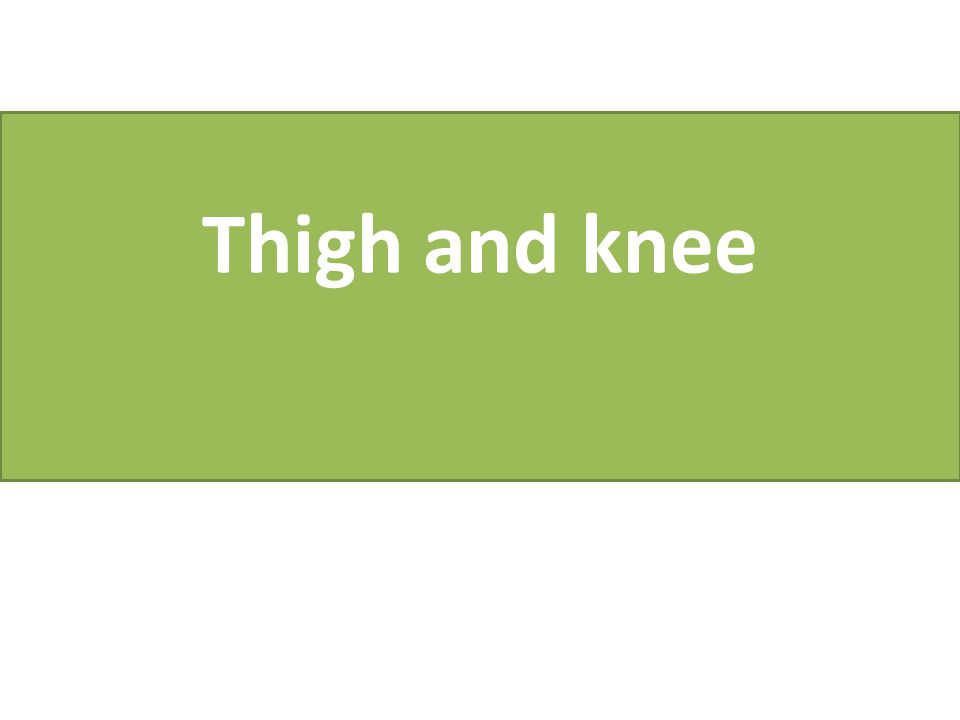 Thigh and knee