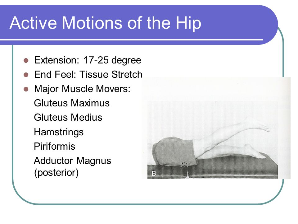 Active Motions of the Hip Extension: 17-25 degree End Feel: Tissue Stretch Major Muscle Movers: Gluteus Maximus Gluteus Medius Hamstrings Piriformis A