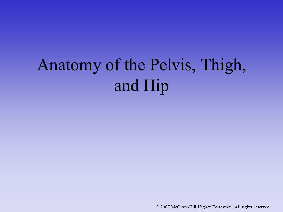 Anatomy of the Pelvis, Thigh, and Hip