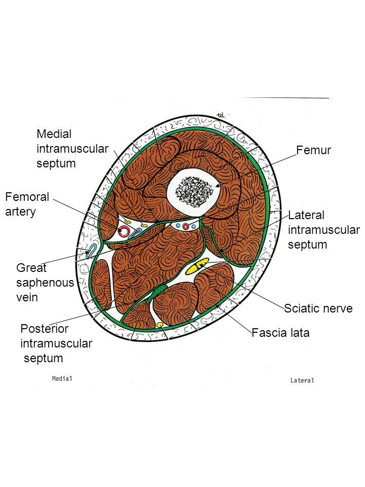 Plate 506 Tibial n.Posterior tibial a. Flexor hallucis longus m.