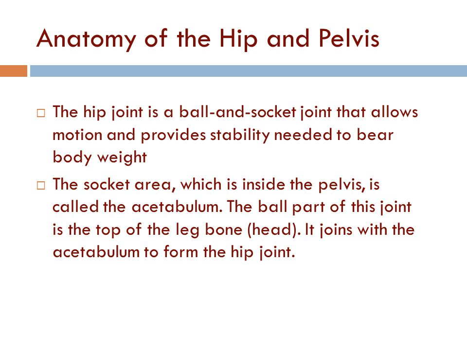Anatomy of the Hip and Pelvis  The hip joint is a ball-and-socket joint that allows motion and provides stability needed to bear body weight  The so