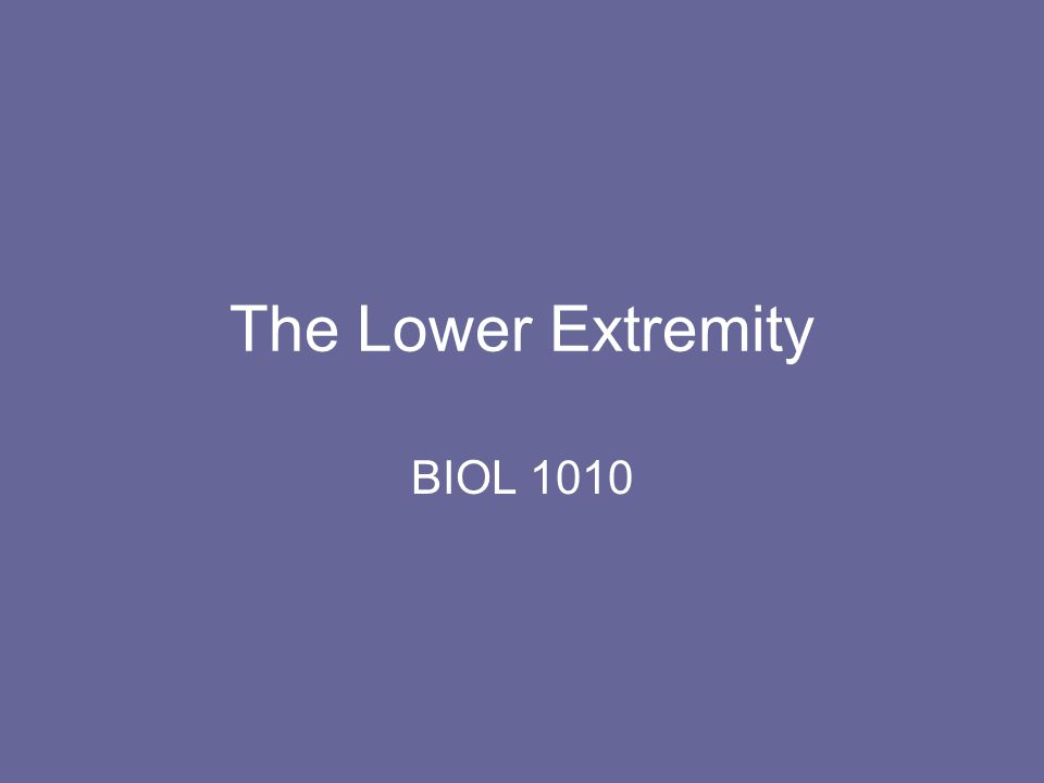 The Lower Extremity BIOL 1010
