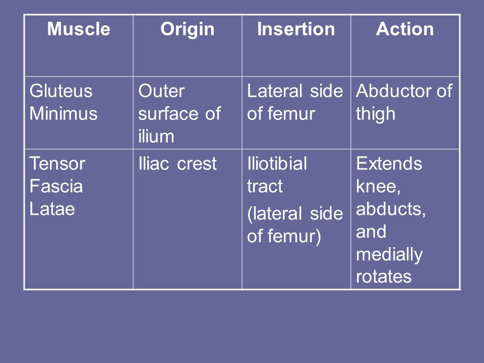 MuscleOriginInsertionAction Gluteus Minimus Outer surface of ilium Lateral side of femur Abductor of thigh Tensor Fascia Latae Iliac crestIliotibial tract (lateral side of femur) Extends knee, abducts, and medially rotates