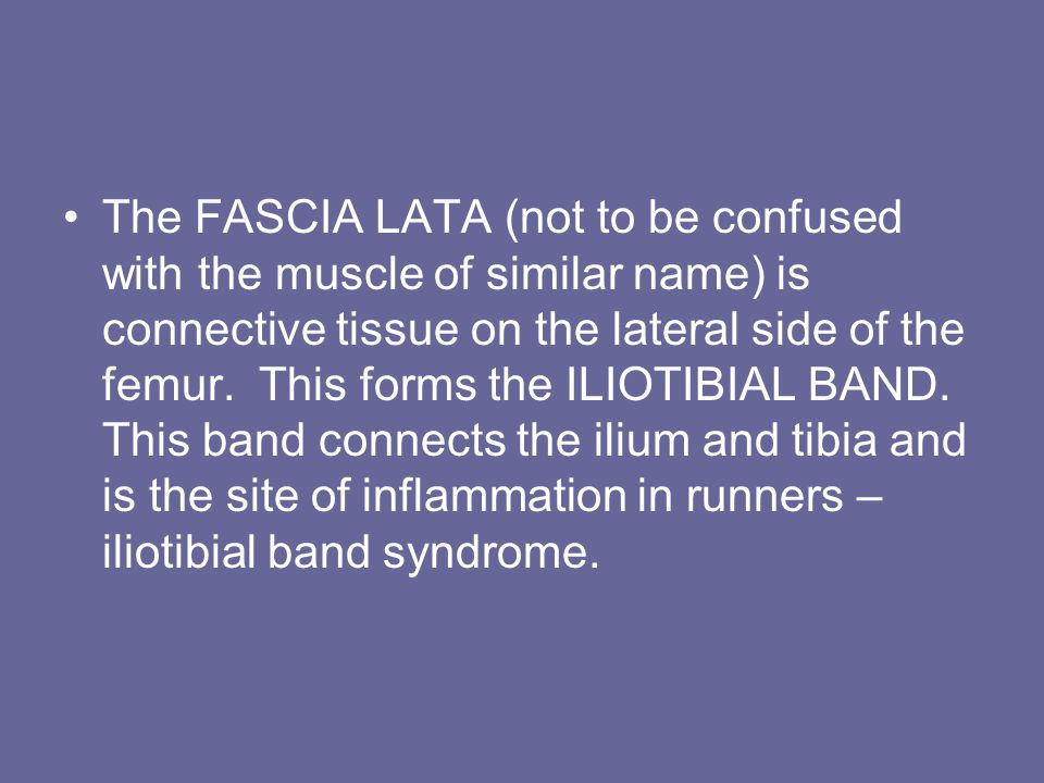 The FASCIA LATA (not to be confused with the muscle of similar name) is connective tissue on the lateral side of the femur.