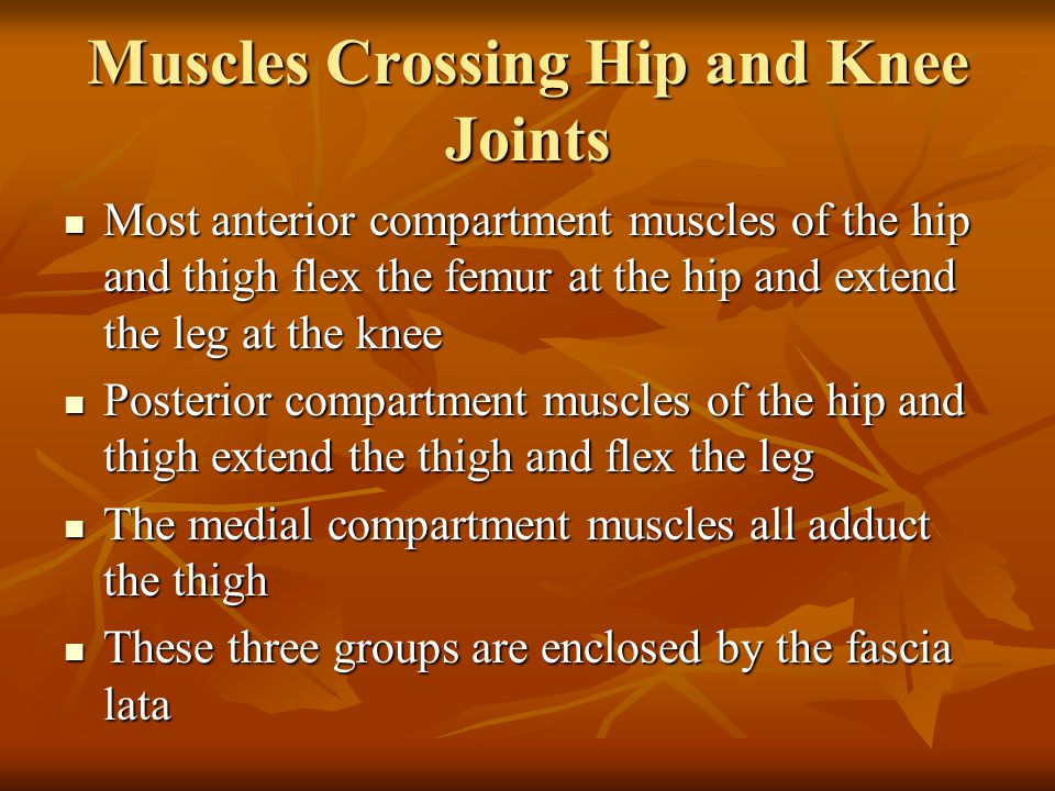Muscles Crossing Hip and Knee Joints Most anterior compartment muscles of the hip and thigh flex the femur at the hip and extend the leg at the knee M