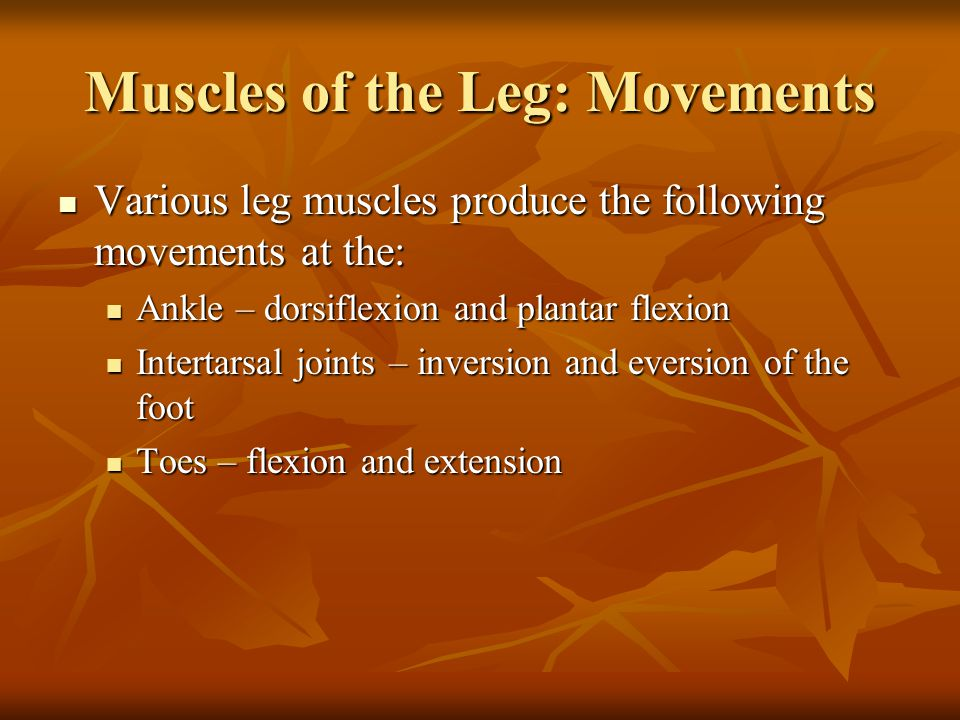 Muscles of the Leg: Movements Various leg muscles produce the following movements at the: Various leg muscles produce the following movements at the: